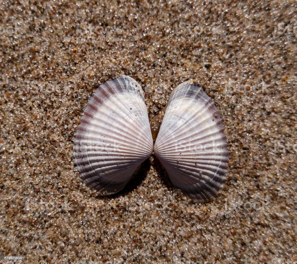 Background of river sand with  beautiful seashells. Close-up. Place for text. Nature. stock photo
