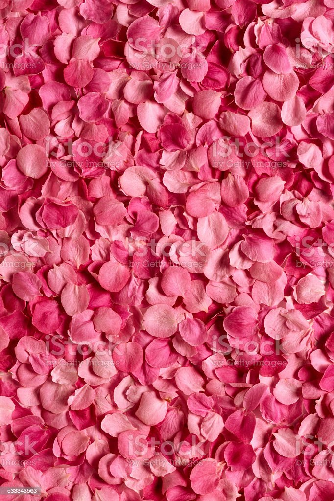 Background of rose petals stock photo