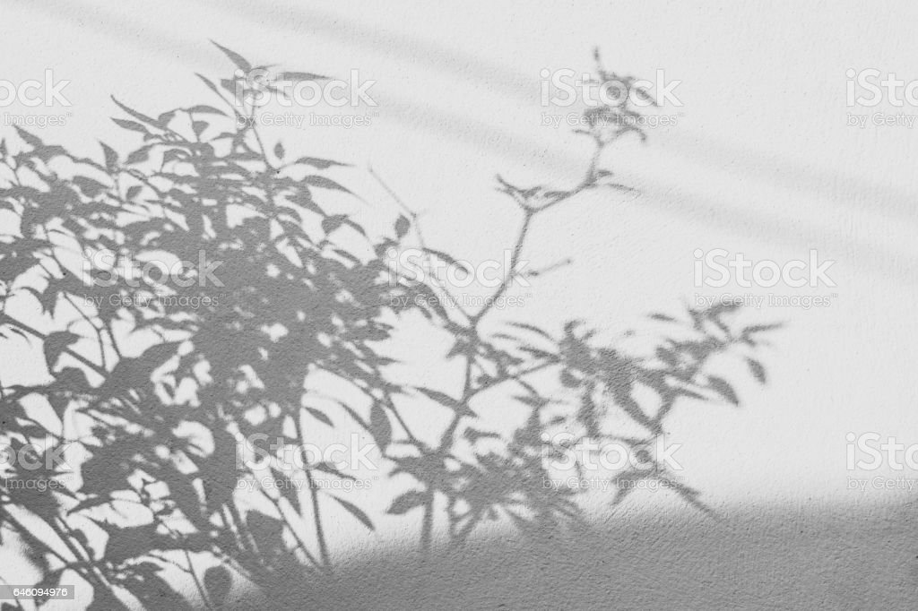 background of shadows leaf on a white wall stock photo