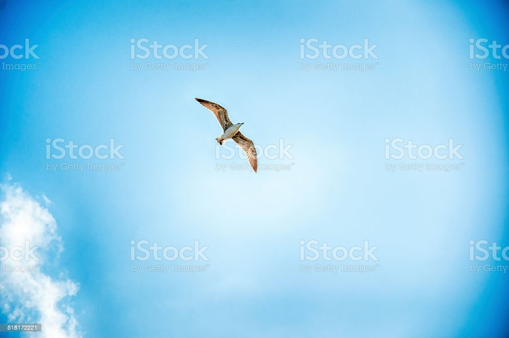 background of sky and bird stock photo