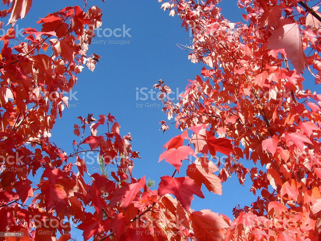 Background of sky and red leaves royalty-free stock photo
