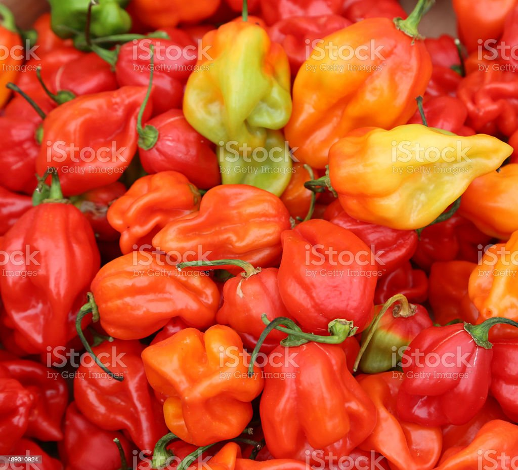 background of spicy red habanero peppers stock photo