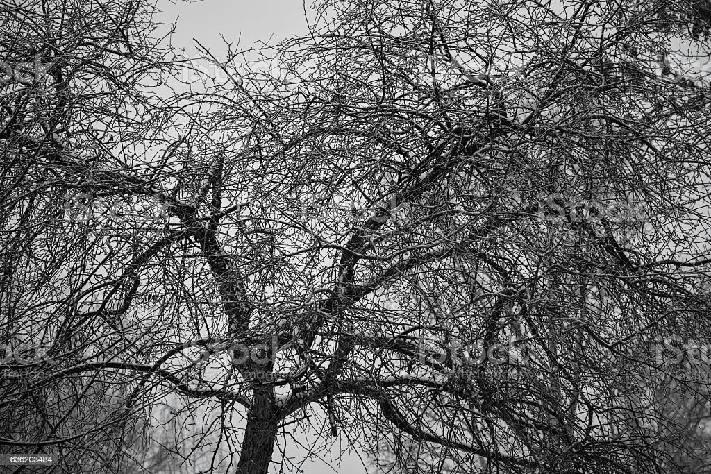 Background of the branches of a bare tree stock photo