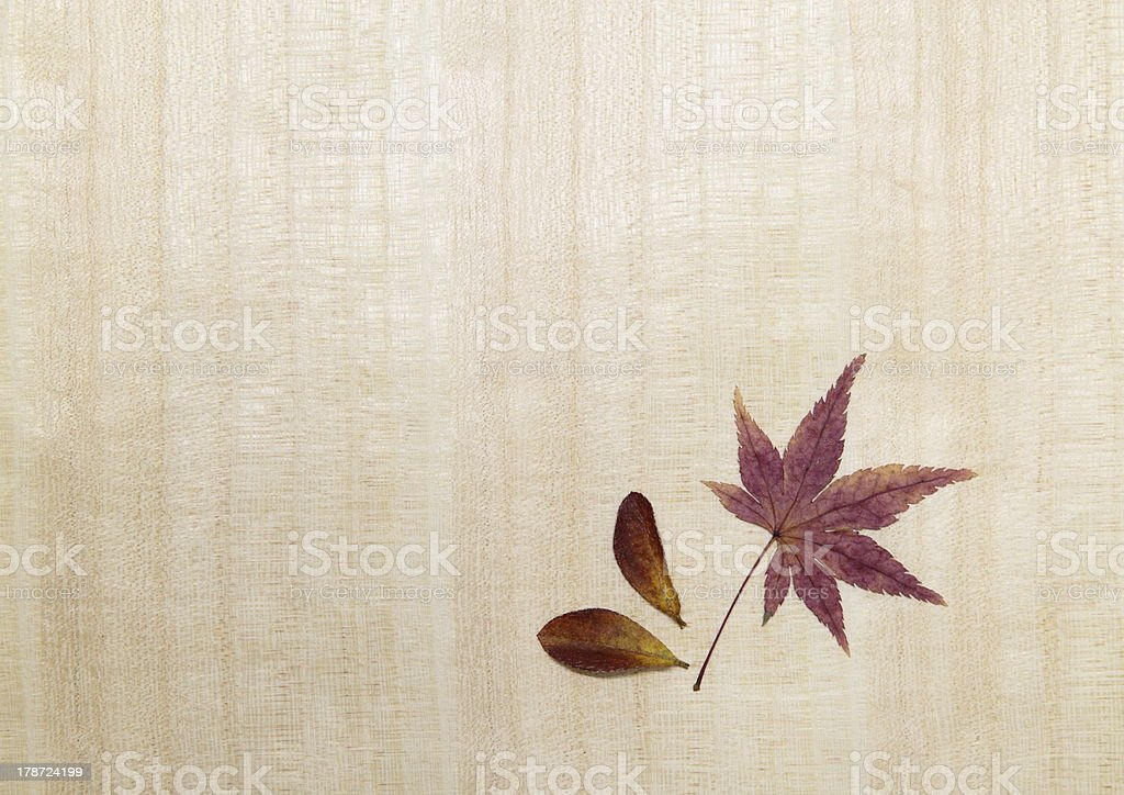 Background of the maple which turned red royalty-free stock photo
