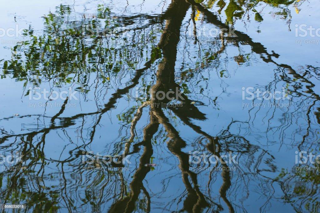 Background of trees mirrored on rippled water surface stock photo