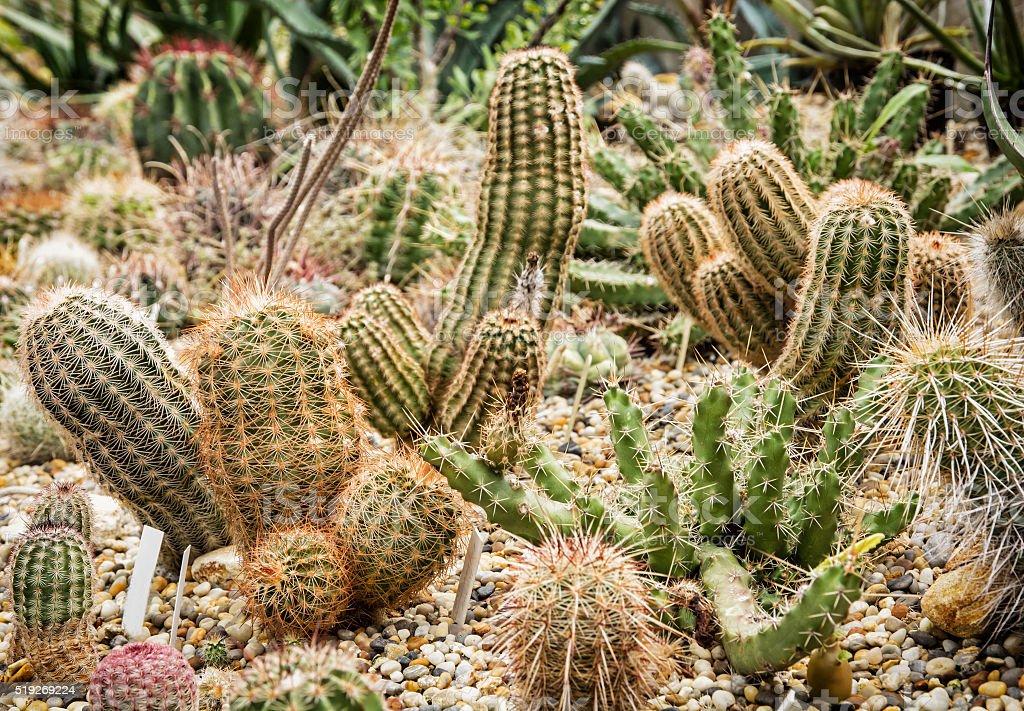 Background of various cacti, gardening theme, flower shop stock photo