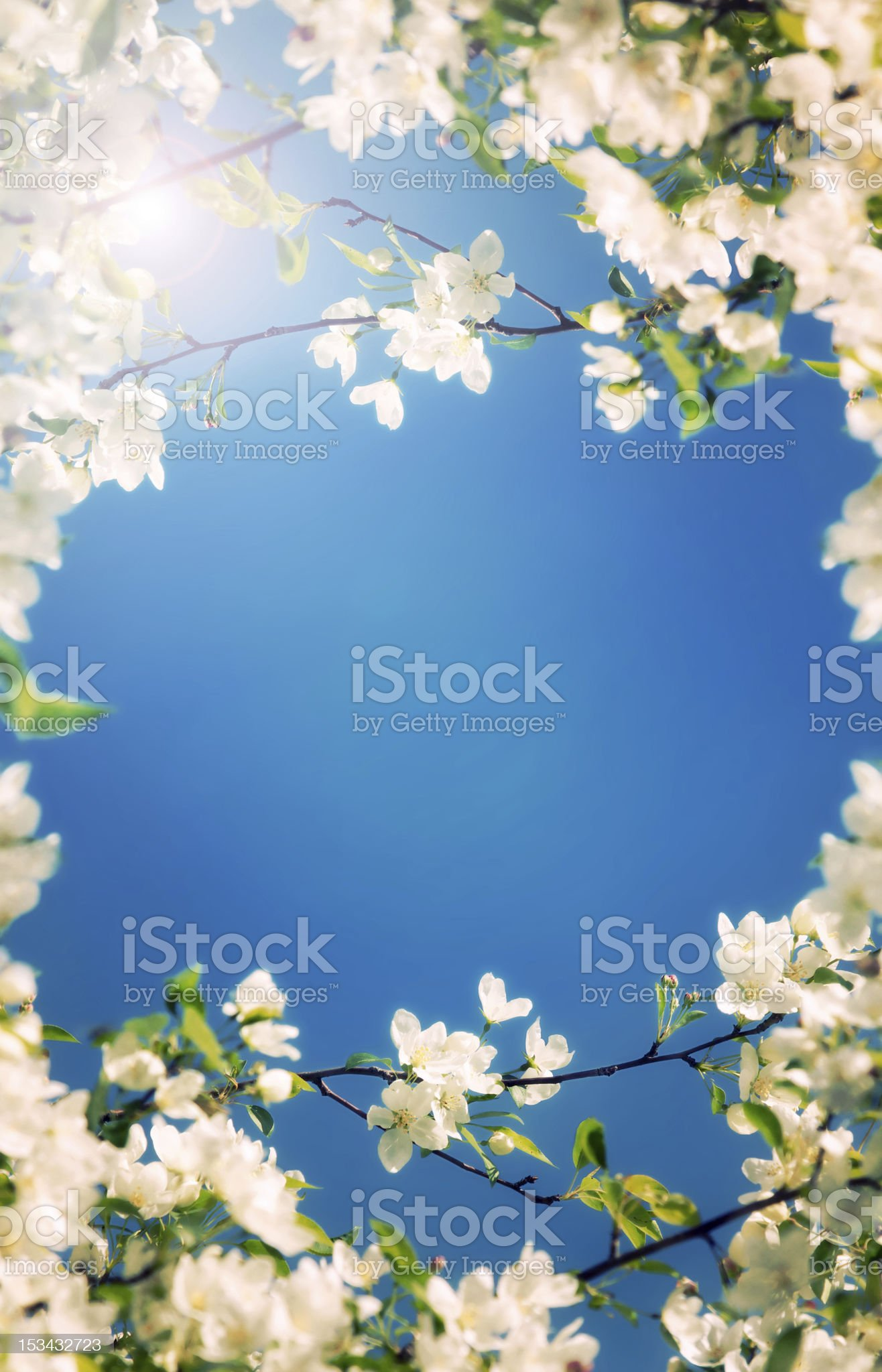 background of white flowers royalty-free stock photo