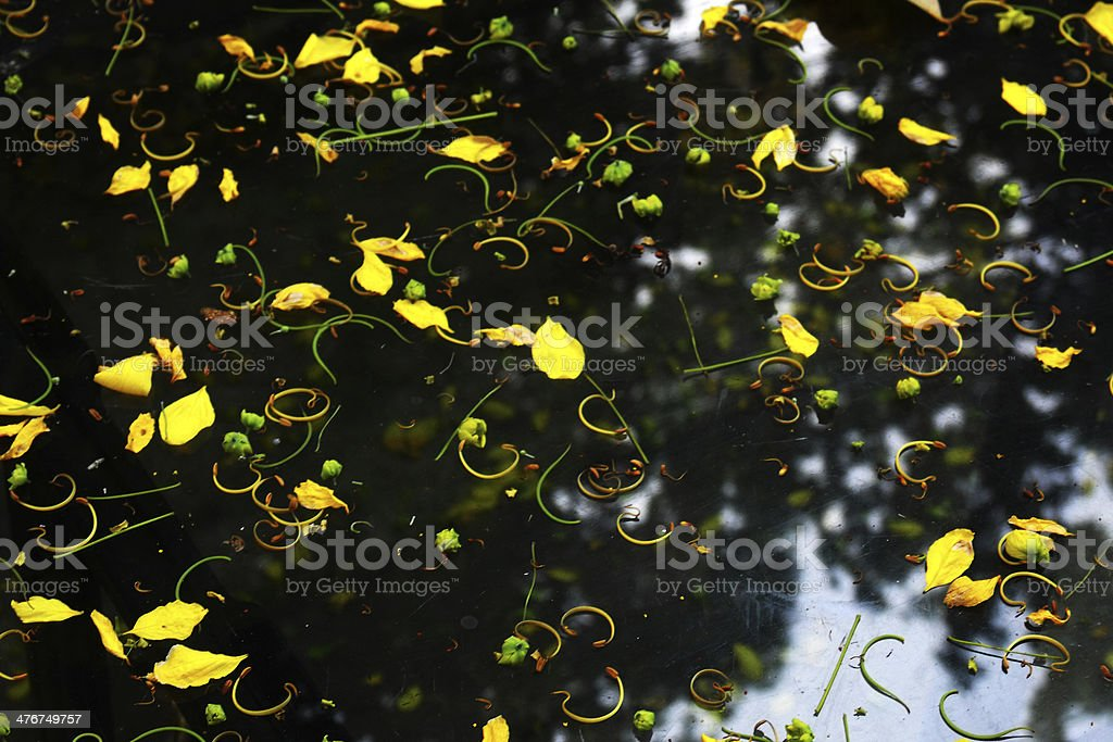 background of yellow petals royalty-free stock photo