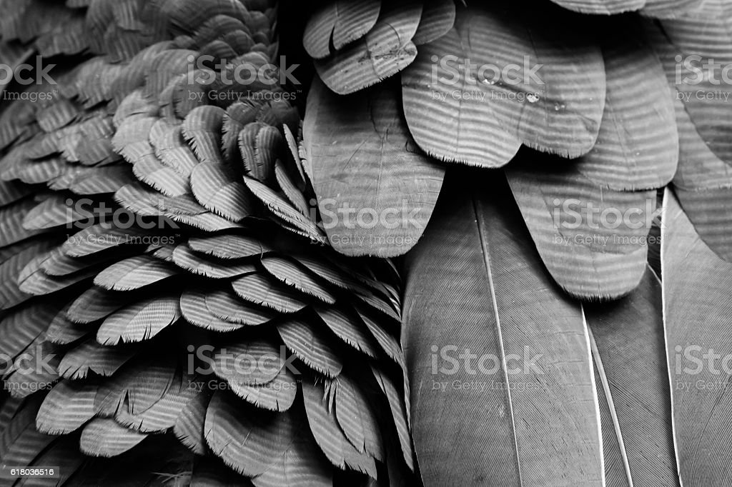 Background pattern of black feathers. stock photo