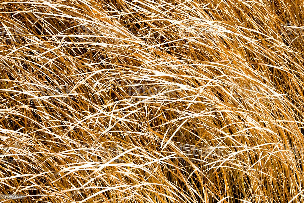 Background Reedbed. Series royalty-free stock photo