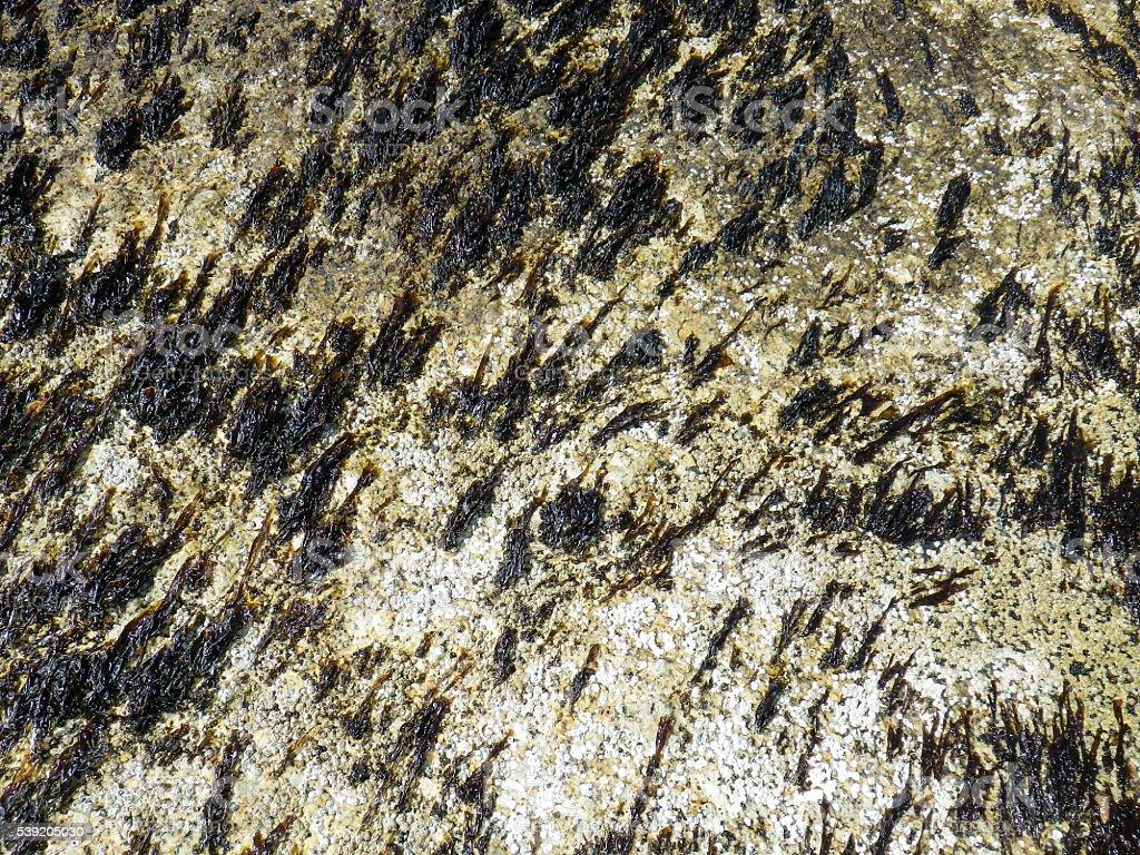 Background Rock Pool Geology Layers Rising Diagonally and Vegetation stock photo