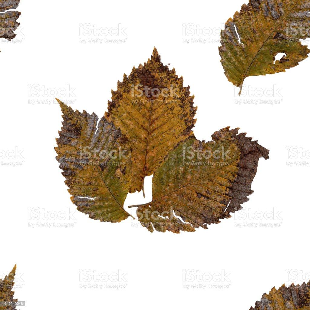 background seamless texture made Hawthorn rusty sheet stock photo