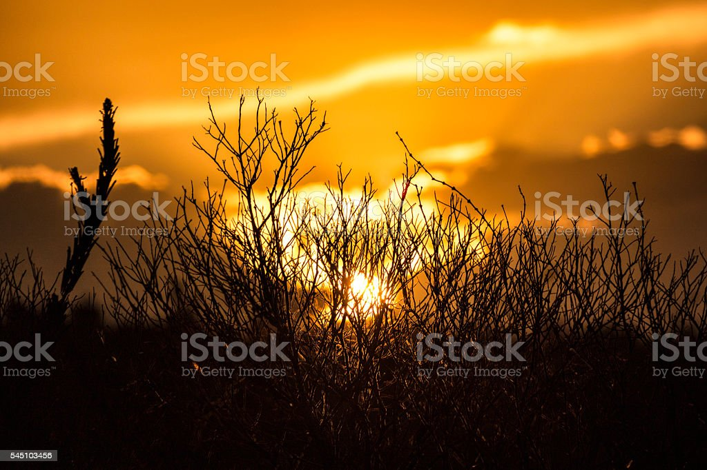Background silhouettes of grass and spikelets in field at sunset stock photo