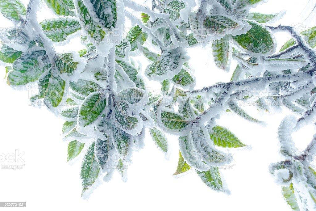 background, snow on leaf stock photo