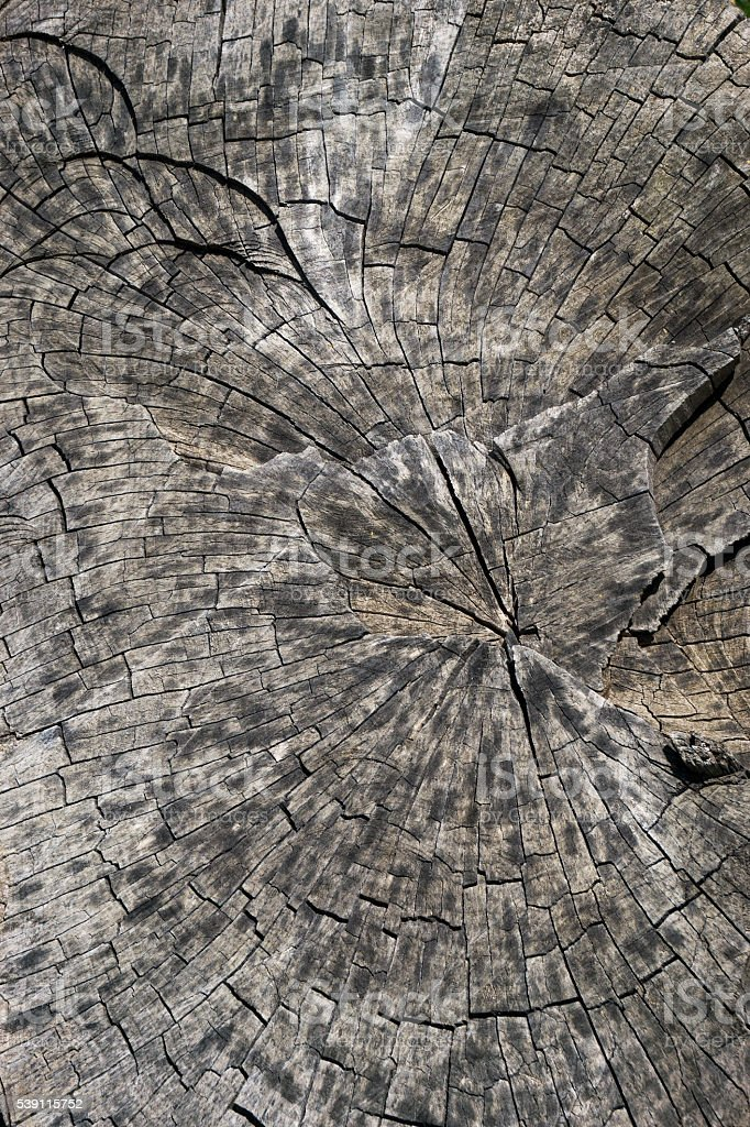 background, texture felled a large tree trunk stock photo