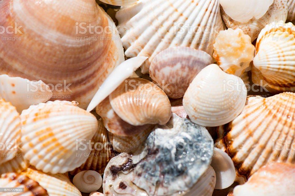 background texture of assorted seashells stock photo 520777600