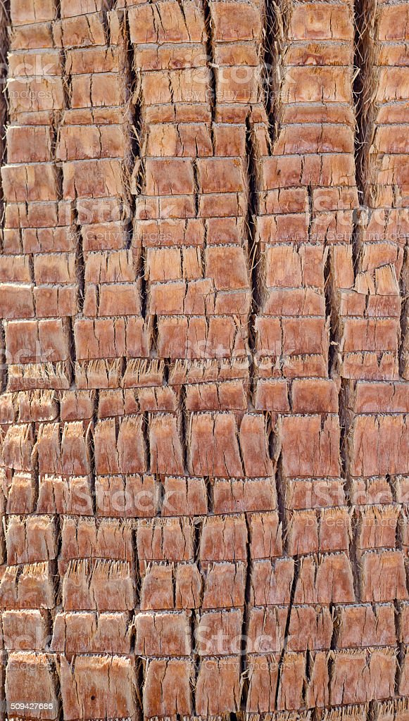 Background texture of palm tree bark stock photo