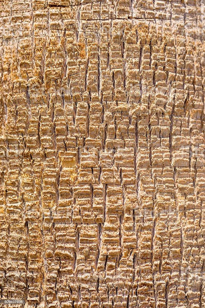 Background texture of palm tree bark stock photo