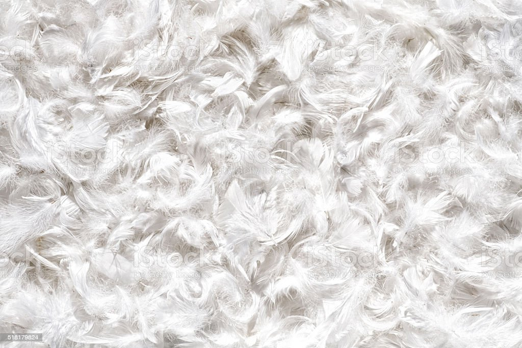 Background texture of soft white bird feathers stock photo
