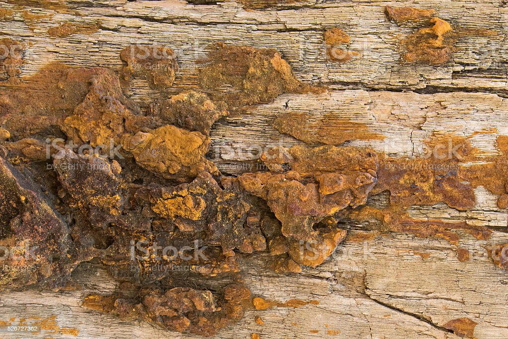 Background texture photo of petrified ancient wood changing into stone stock photo