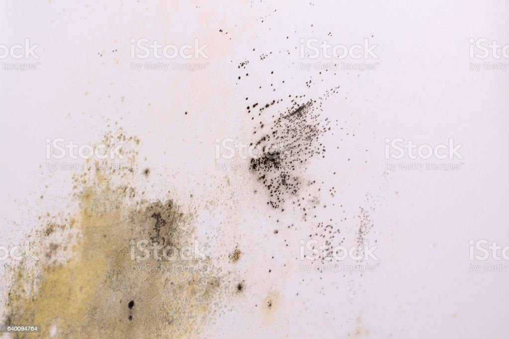 Background wall with mold. stock photo