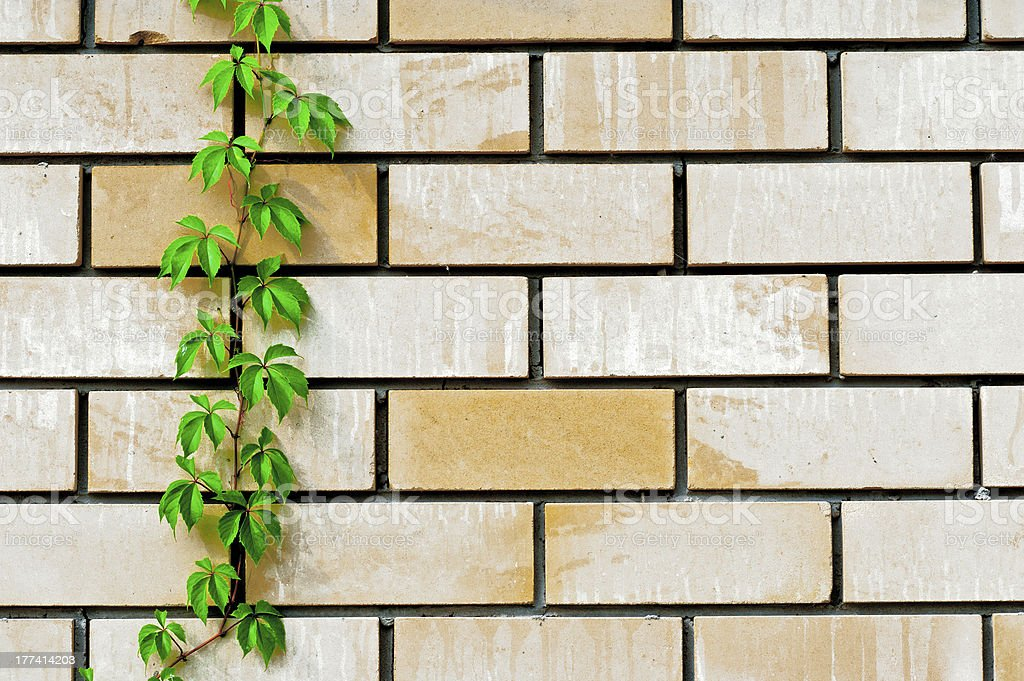 background wall with plants royalty-free stock photo