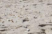 Background white sand beach full of seashells.