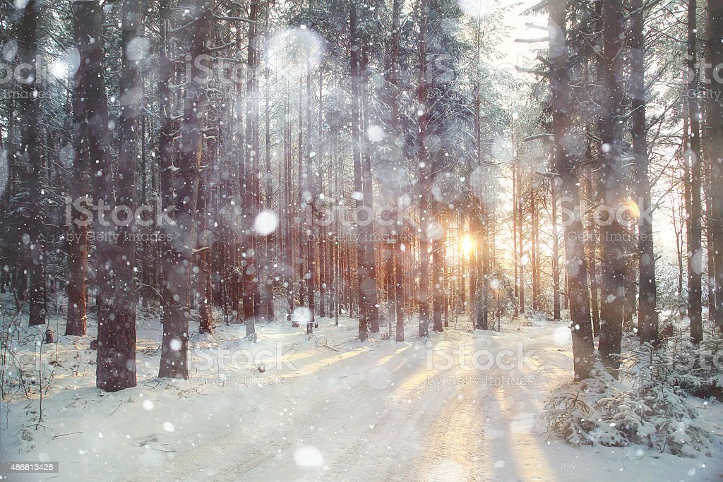 background winter forest sunny day stock photo