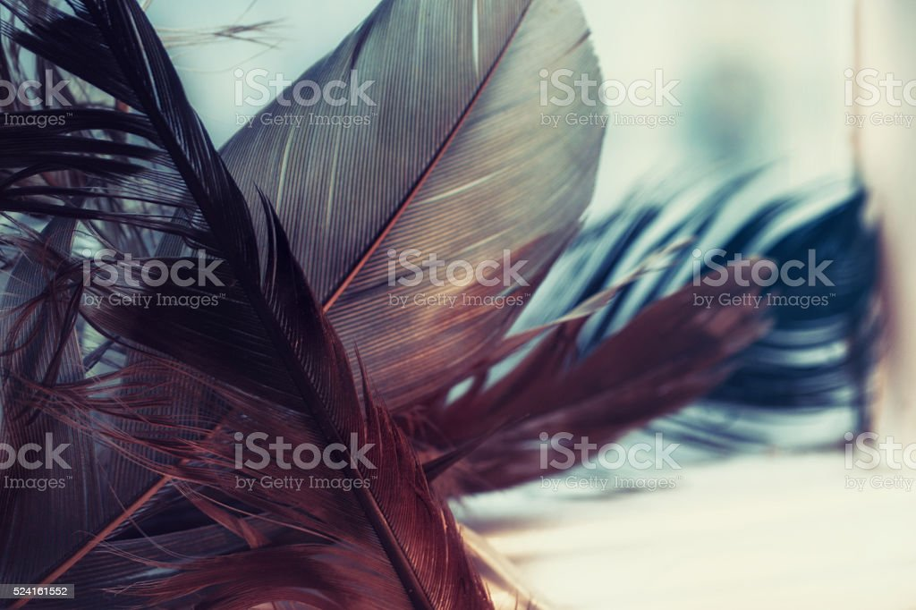Background with eagle feathers stock photo