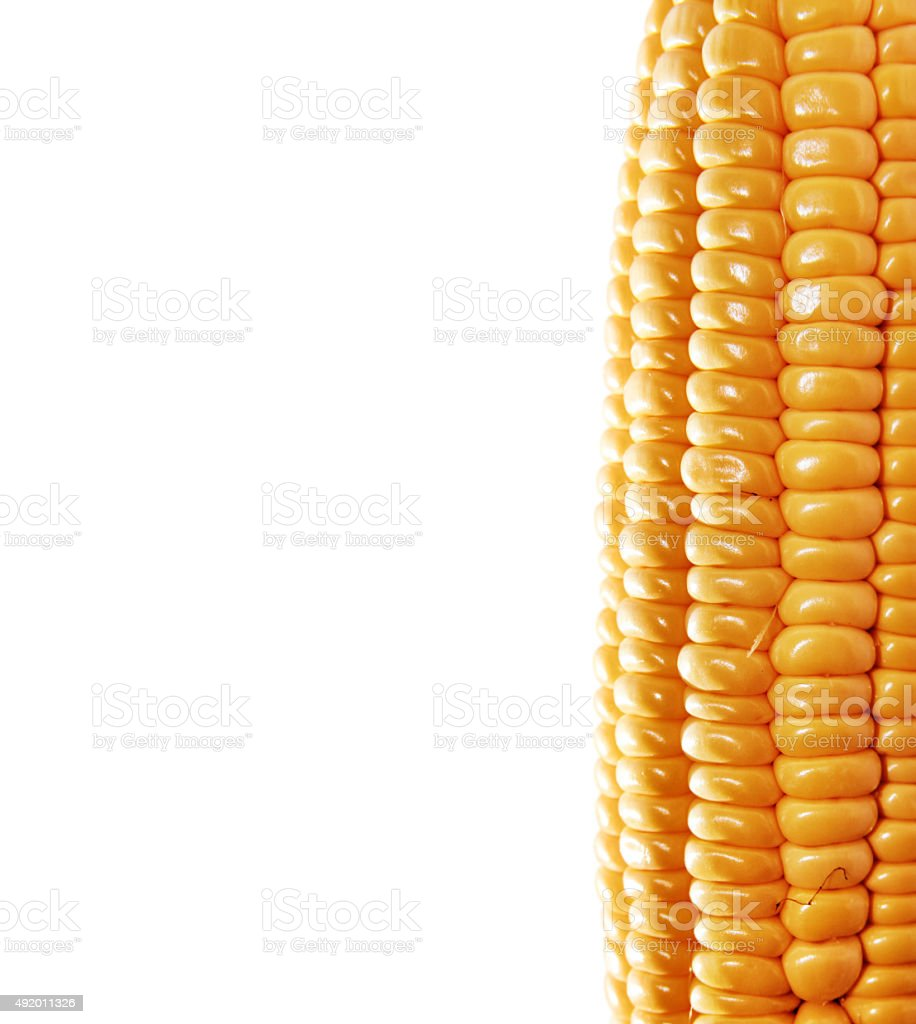 background with ear of corn stock photo