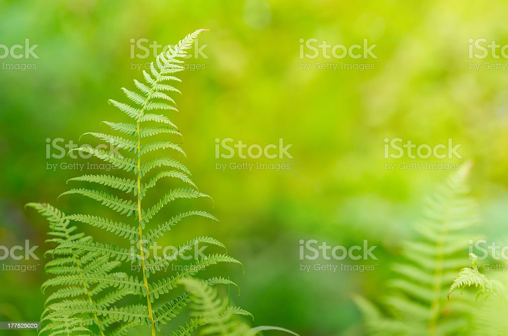 Background with fern leaf stock photo