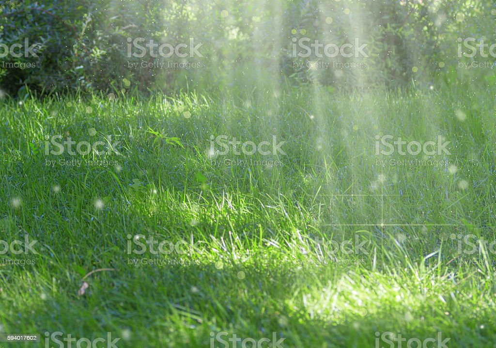Background with green summer landscape.selective field of focus stock photo
