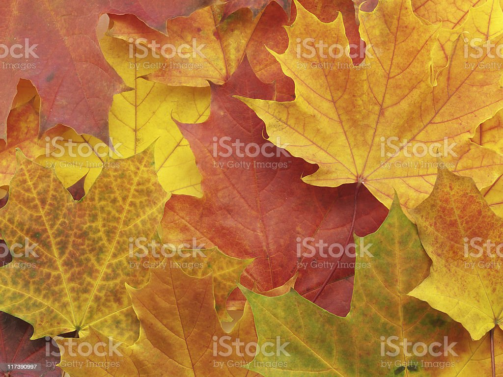 Background with leaves royalty-free stock photo