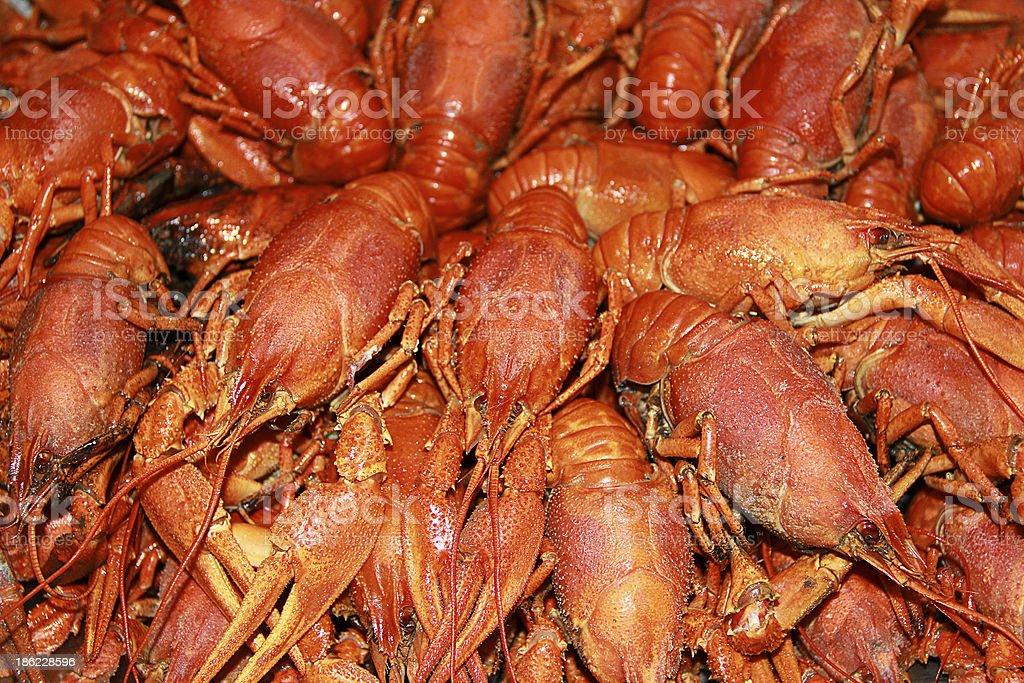 Background with many crawfishes royalty-free stock photo
