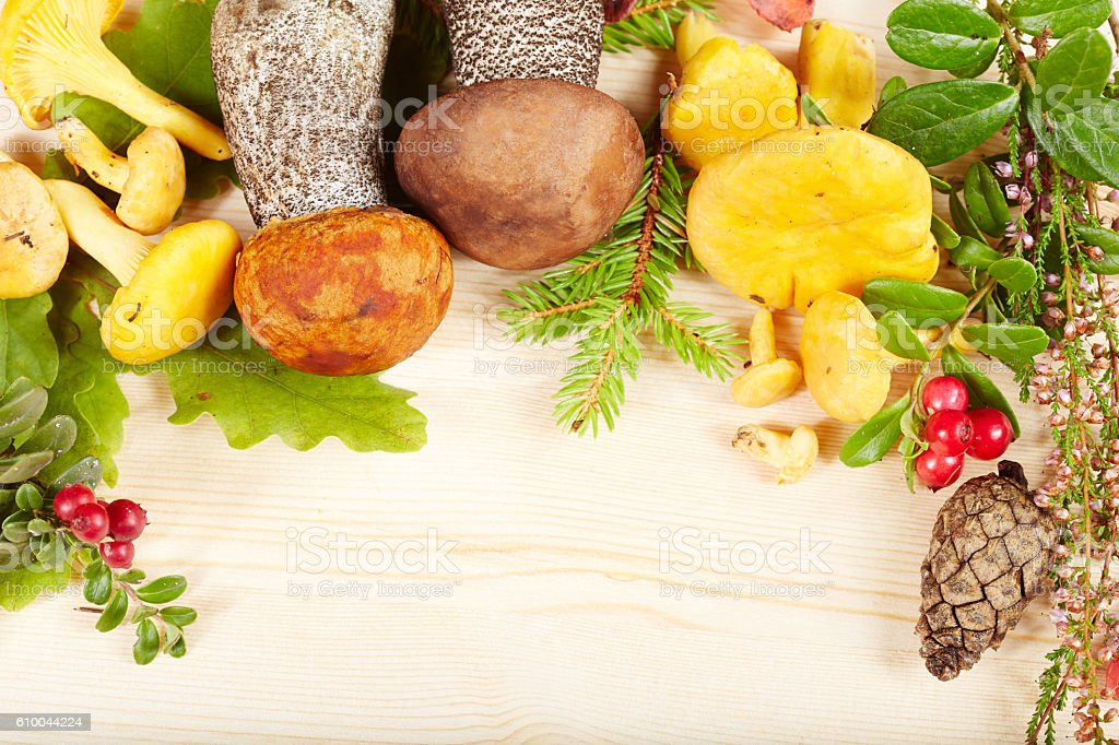 Background with mushrooms, herbs, berries and blank space for text stock photo