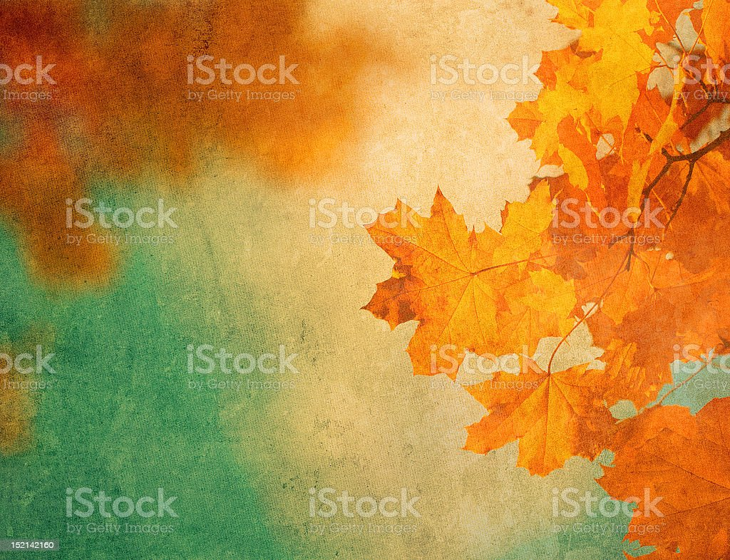 A background with orange autumn leaves stock photo