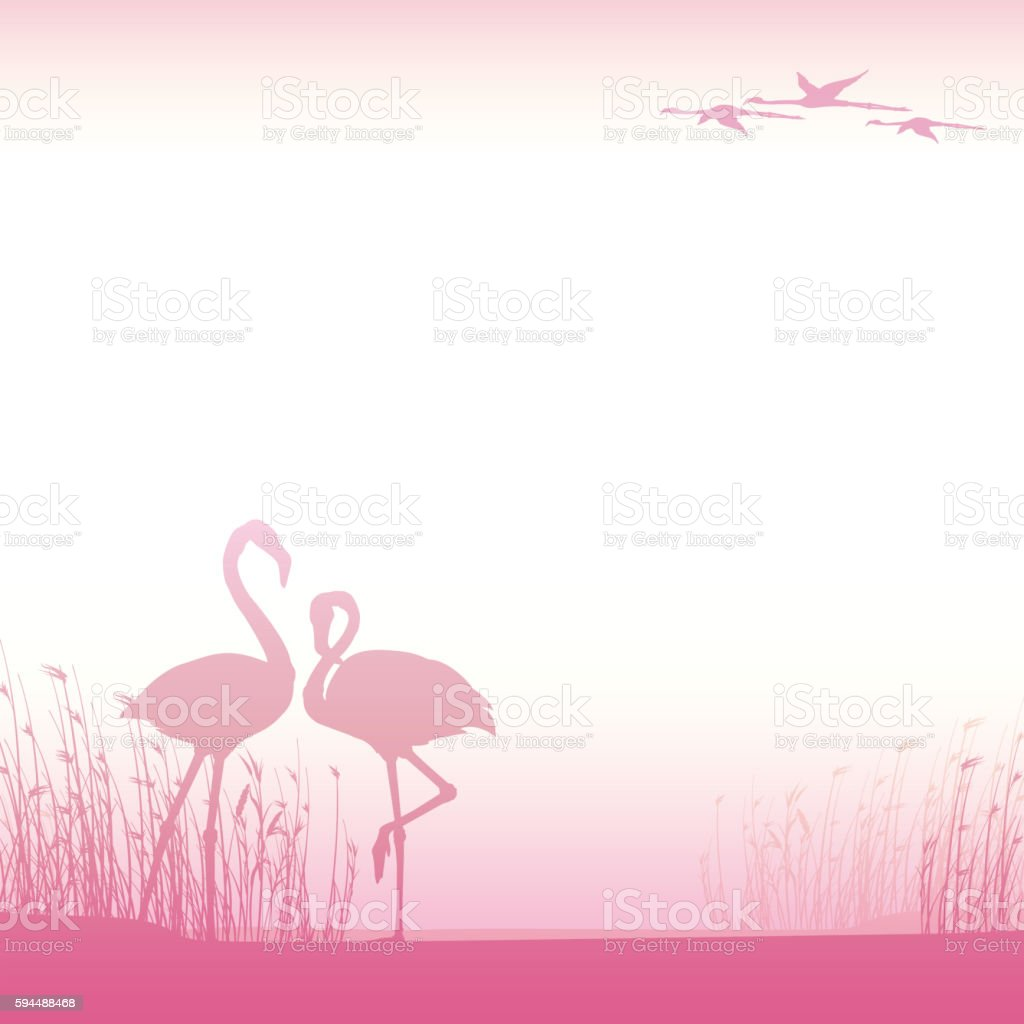 Background with Pink Flamingos stock photo