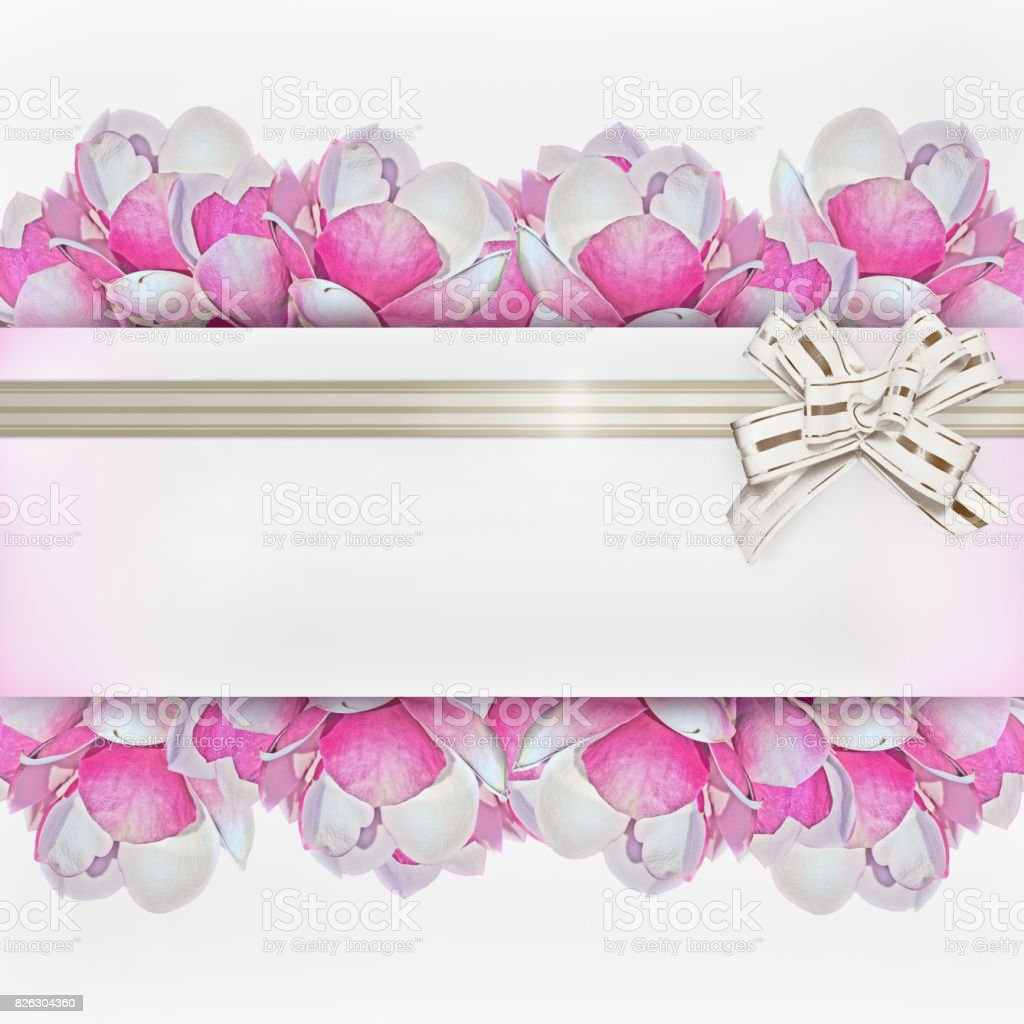 background with pink magnolia flowers stock photo