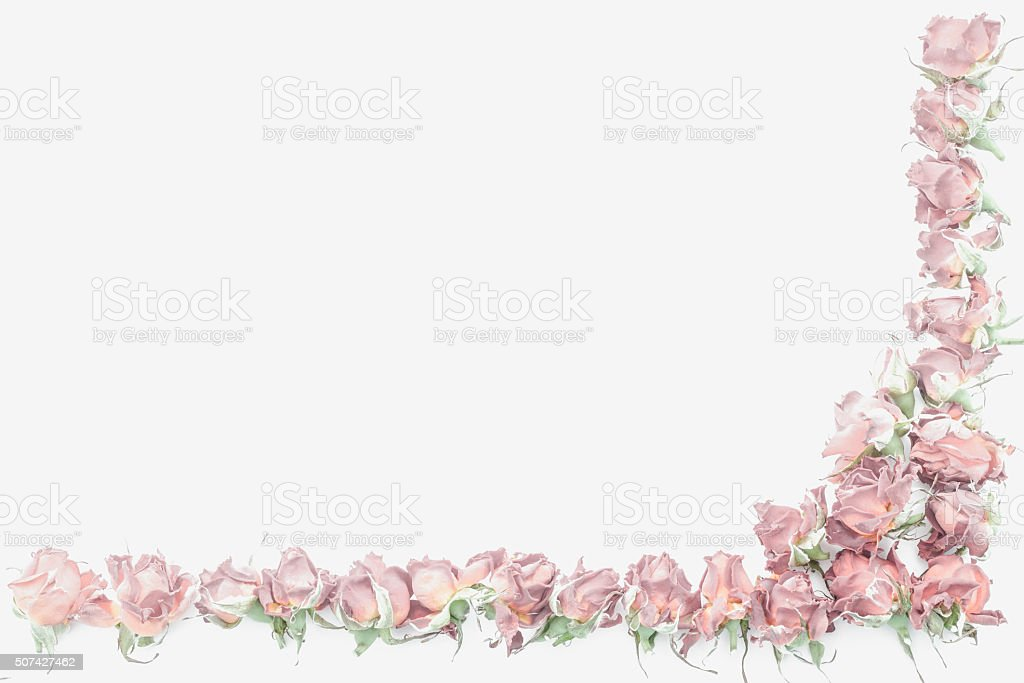 background with roses isolated on white with sample text stock photo
