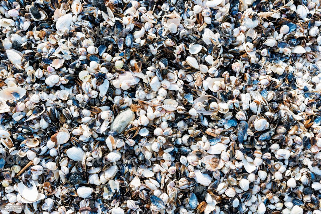 Background with sea shells. stock photo