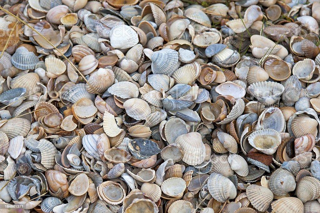 Background with seashells stock photo