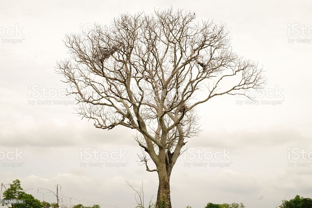 Backgrounds and textures tree without leaves. stock photo