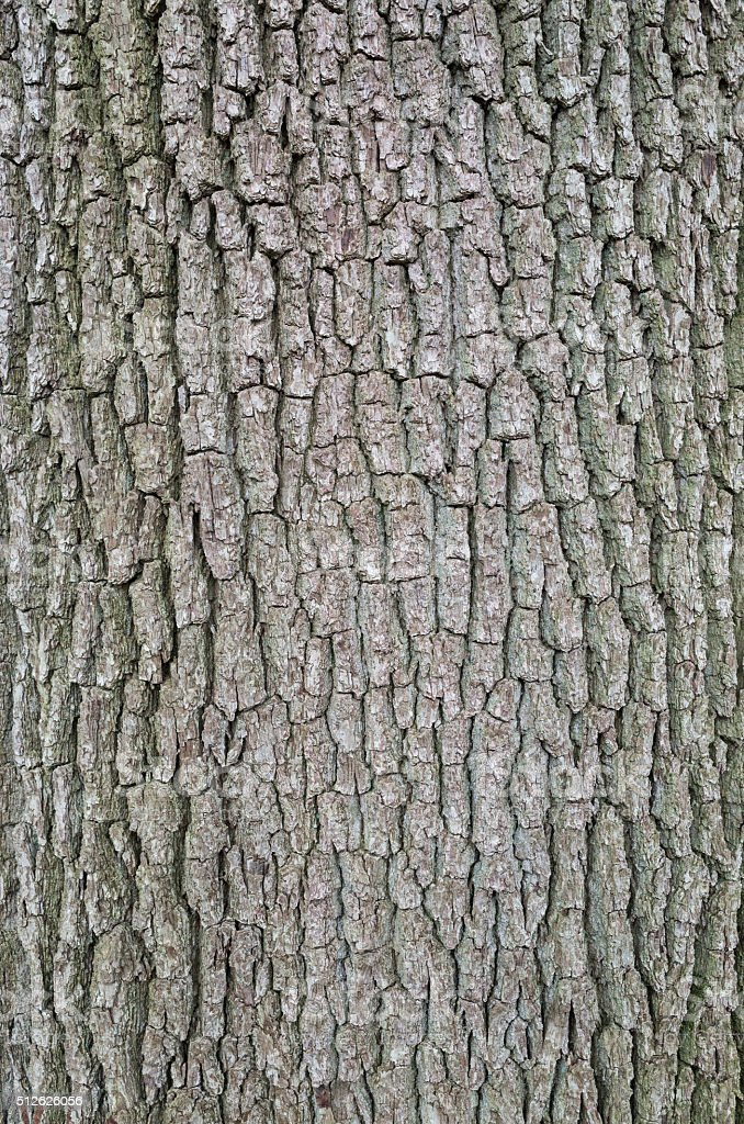Backgrounds: Close-up of old oak tree bark stock photo