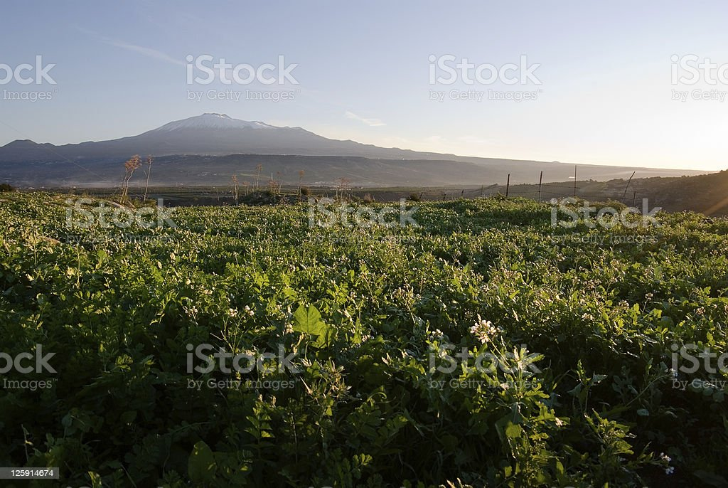 Backlight for Grassy squares and Etna volcano royalty-free stock photo