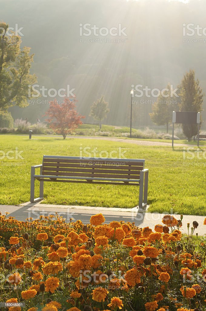 backlit at a park in autumn with bench royalty-free stock photo