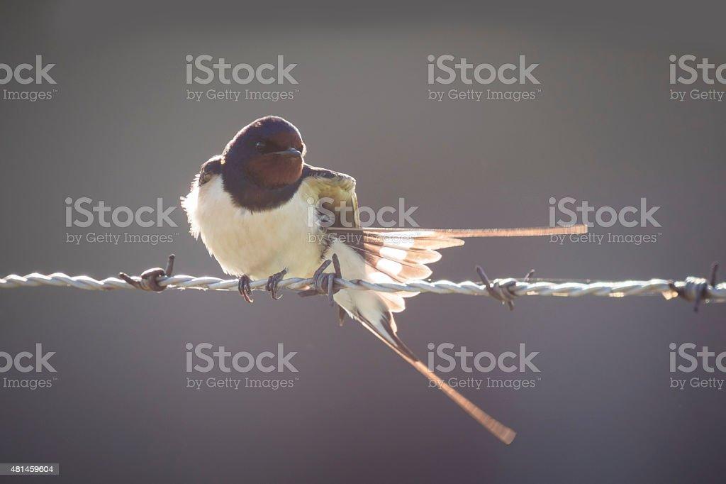 Backlit bird stock photo