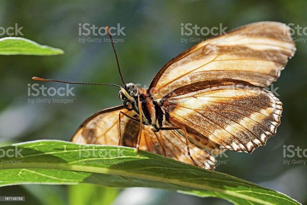 Backlit Butterfly stock photo