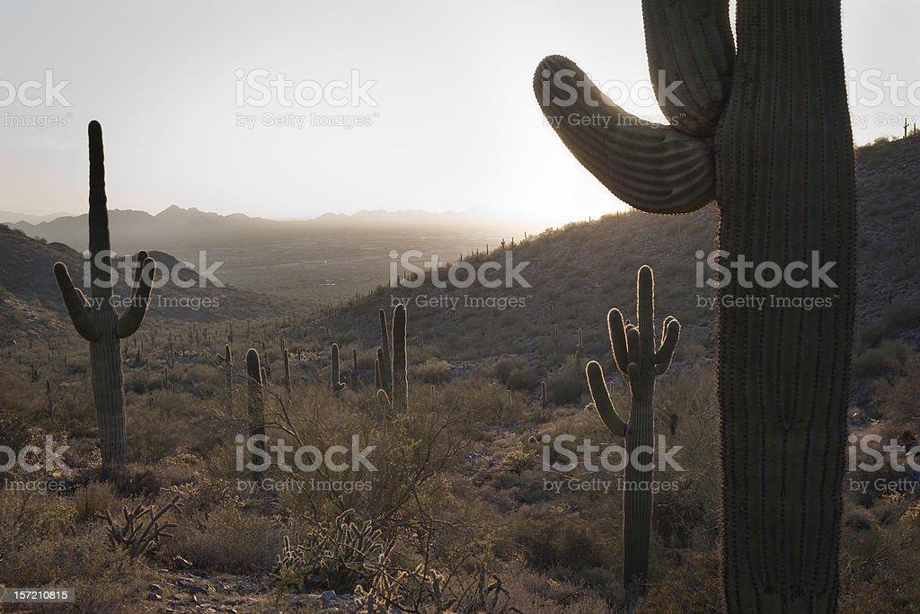 Backlit Desert royalty-free stock photo