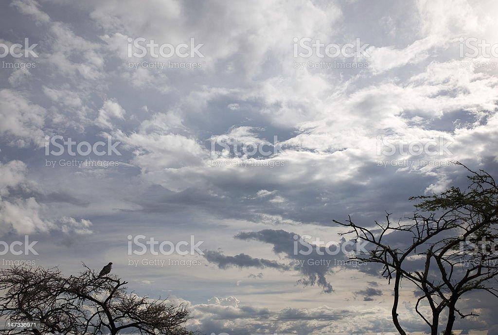 Backlit Eagle royalty-free stock photo