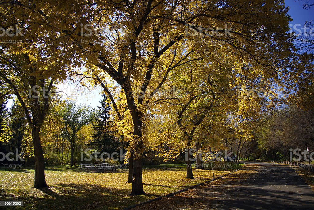 Backlit Elms royalty-free stock photo